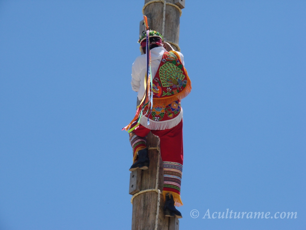 Volador de Papantla going up the tree pole