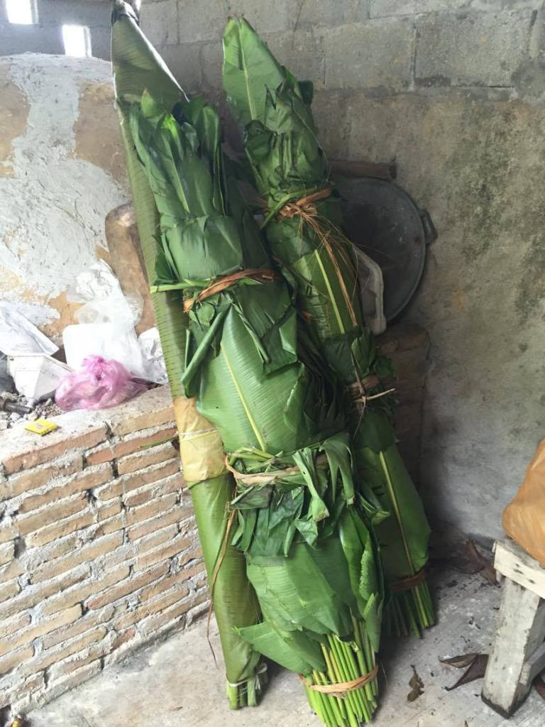 papatla leaves used to make zacahuil