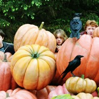 The Amazing Journey of the Pumpkin and its Origins